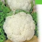 Много в наличии.Семена овощей и цветов Флора Маркет по шаровым ценам. Проверенные временем. Собираем