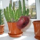 Чудо растение.Выделяет газ.
