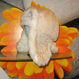 Зимняя шапка-ушанка Gelo,р-р 58