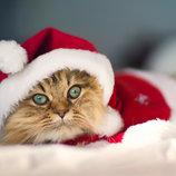 Стрижка груминг котов к Новому Году