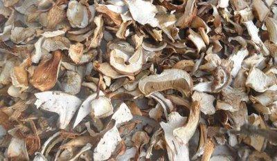 белые сушенные грибы