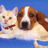 передержка животных в домашних условиях, гостиница для животных