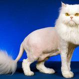 Груминг студия Арчибальд предлагает стрижку котов всех пород
