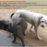 Инструктор по вязке собак всех пород Зоотакси