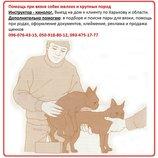 Инструктор по вязке. Первая вязка у собак. Выезд на дом Зоотакси