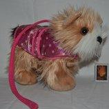 Фирменный Игровой набор Собачка в одежде с поводко для маленькой леди