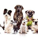 груминг студия Арчибальд предлагает профессиональную стрижку собак всех пород