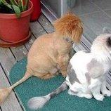 груминг студия Арчибальд предлагает профессиональную стрижку котов всех пород