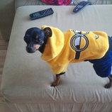 Одежда Костюм плюшевый для собак