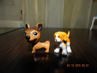 собака , пес,