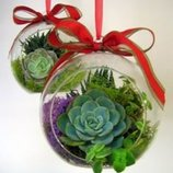 Ялинкові іграшки із живих рослин, новорічний декор дому