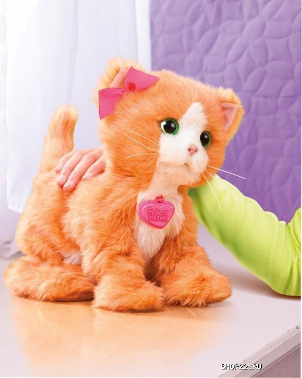 Toys cats play with