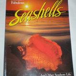 Фотоальбом книга на английском Seashells Florida Pete Carmichael Флорида моллюски научное издание
