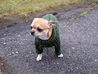 Теплый вязаный свитер для собачки.
