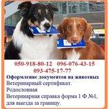 Оформление документов на животных - быстрое оформление. Ветеринарная справка форма 1 Ф 1, для выезд