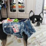 Стильный джинсовый жилет для собак XS - 2XL