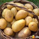 Киев Виноградарь Возьму картошку отдам свои товары Обмен мое на ваше