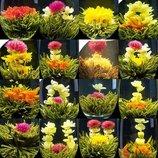 Чай Ростущий цветок -чайная церемония на вашей кухне