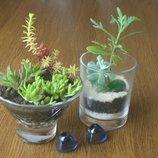 Стильні подарунки із живих рослин сукулентів для жінок
