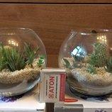 Флорариум, Композиция из суккулентных растений, кактусов, подарок