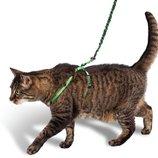 Шлейка поводок для котов и маленьких собак
