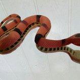 Игрушка змея. Мягкая. Резина