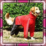 Дождевики для собак разных пород. Одежда для собак. Комбинезоны для собак.