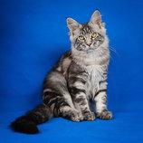 Фотограф для домашних животных.
