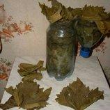 Виноградные листья для долмы,голубцов,сармы Очень вкусные