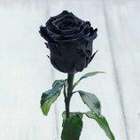 Подарок подчёркивающий Ваш статус Стабилизированная роза в колбе Lerosh Standart 33 см, Черная