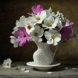 Картина По Номерам. BRUSHME КОСМЕИ . Цветы. Квіти. Натюрморт.