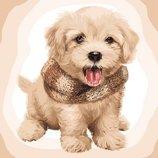 Картина по номерам. Пушистый щенок 40 50см KHO4116