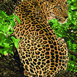 Картина По Номерам. Животные, Птицы ЛЕОПАРД 40 50СМ KHO4101