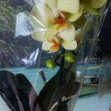 Орхидеи и комнатные растения.Большой выбор