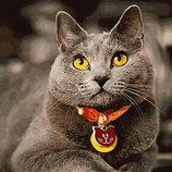 Картина По Номерам. BRUSHME Британец GX21645. Кот. Котик. Кіт.