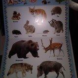 Детские книги картонные Развиваем малыша от 0 до 1 года Словарный запас, буквы, цифры и др.