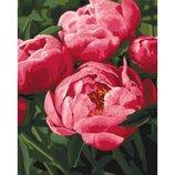 Картины по номерам - Любимые цветы Кно3049 Пионы