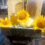 Мёд подсолнух разнотравье