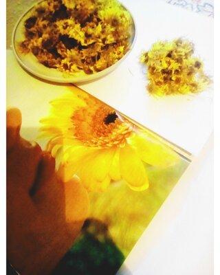 Календула Ноготки фитотерапия сушеные травы