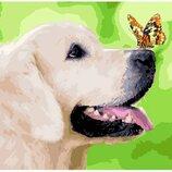 Картина по номерам. Brushme Лабрадор и бабочка GX29813. Брашми. Собака.