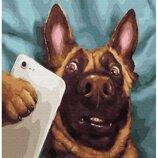 Картина по номерам. Brushme Собачье селфи GX29951. Брашми.