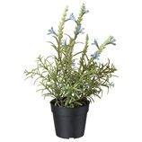 Фейка Искусственное растение в горшке, голубая лаванда, 9 см, 30429514, Икеа, IKEA, FEJKA