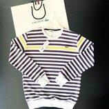 Стильный мужской свитшот Lacoste S M L XL