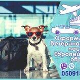Ветеринарная справка форма 1 Справка на титры, ветеринарный паспорт