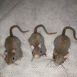 Магнит мышка