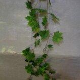 Лиана виноградный лист. длина около 2,8 м