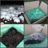 Засеянная грибная коробка белого шампиньона Семейная