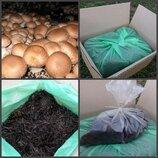 Набор для выращивания королевского коричневого шампиньона Семейный
