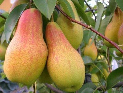 Сушёные яблоки, вишня, груша, слива, кизил, и ассорти