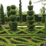 Оформление ландшафта,стрижа и посев газонов,стрижка и посадка декоративных деревьев и кустарников